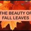 YRC DIY - The Beauty of Fall Leaves